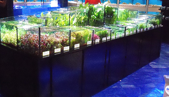 Tropical aquarium manufacturing for Fish store miami